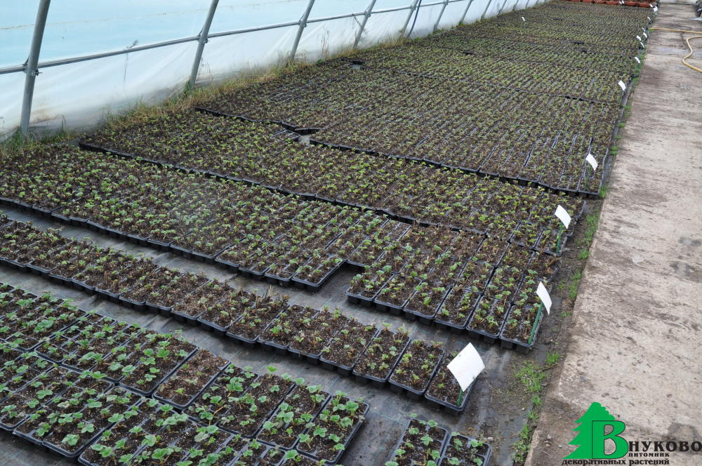 Линия для рассады посев семян рассады в кассеты 96