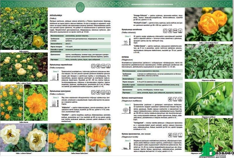 каталог многолетних цветов с
