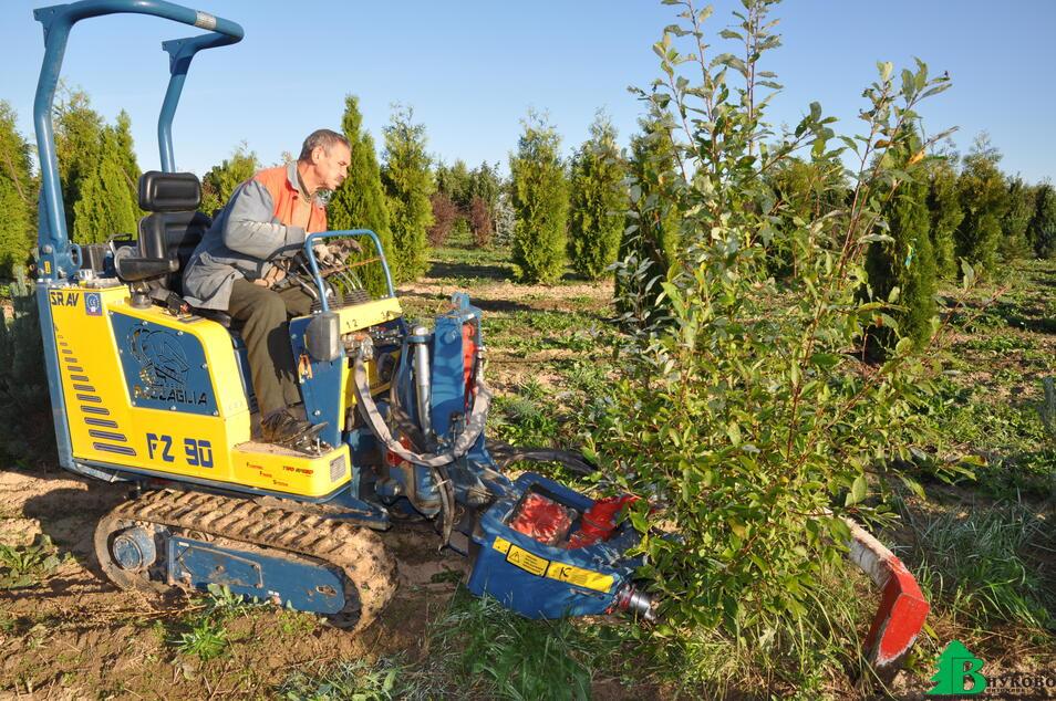 Выкапываем растения из грунта только с помощью машин- быстро и качественно