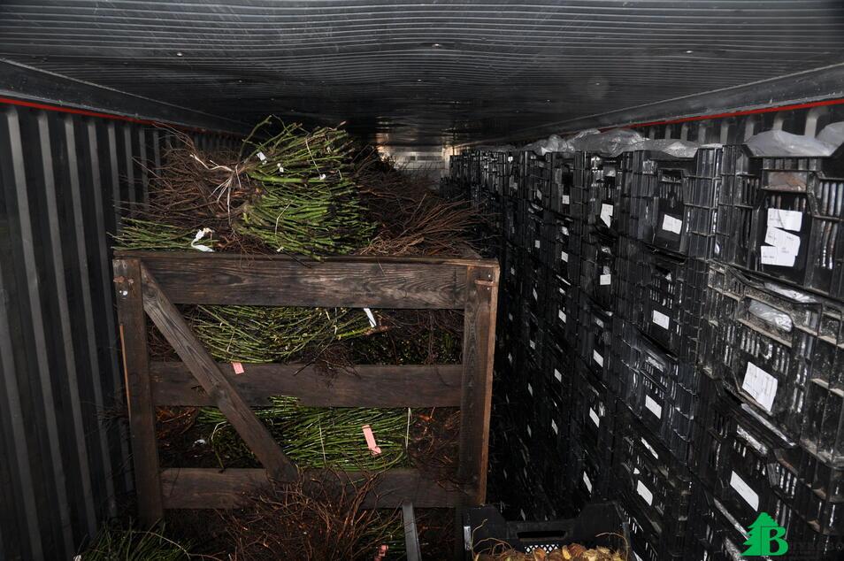 Для хранения растений с голым корнем зимой используется специальный холодильник