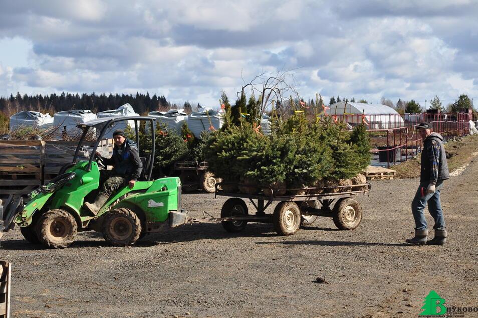 Подготовка растений для отгрузки заказчикам