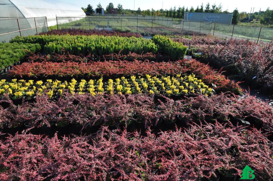 Ежегодно выращиваем более 200 000 растений в контейнерах