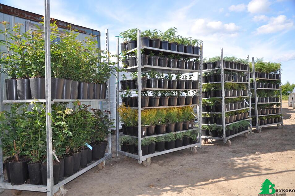 Вот так развозим заказы контейнерных растений по садовым центрам