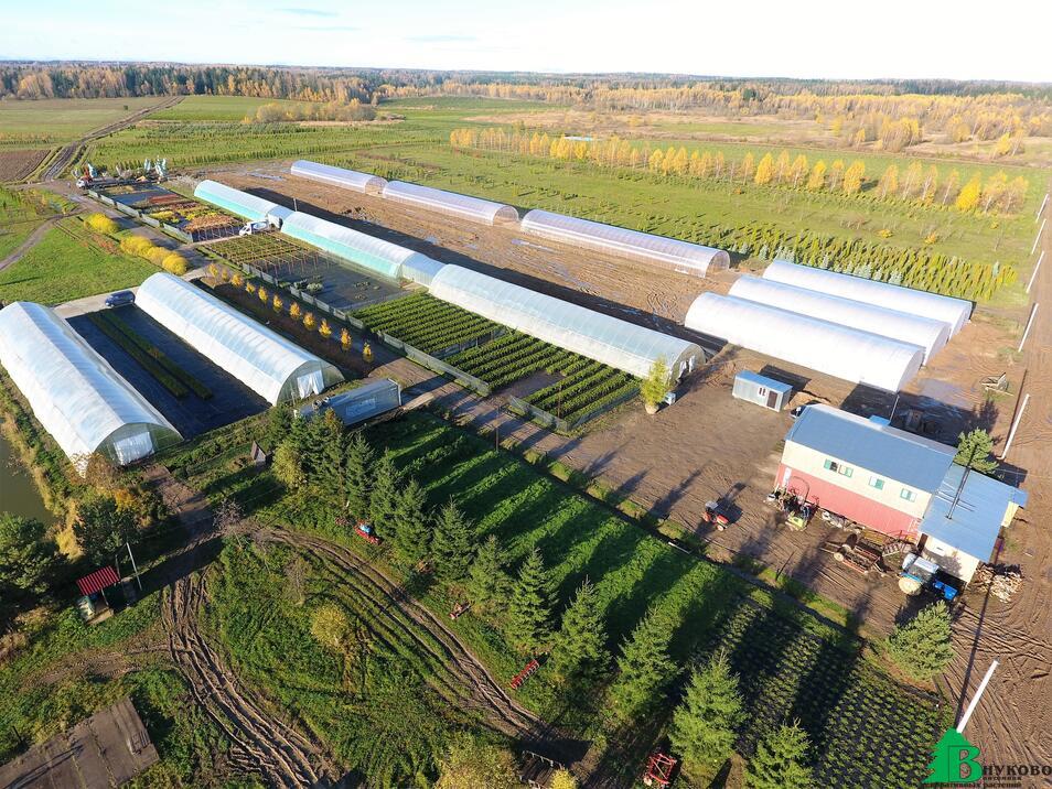 Тепличный комплекс питомника Внуково разрастается каждый год. Скоро площадь теплиц и контейнерной площадки будет 2 гектара.