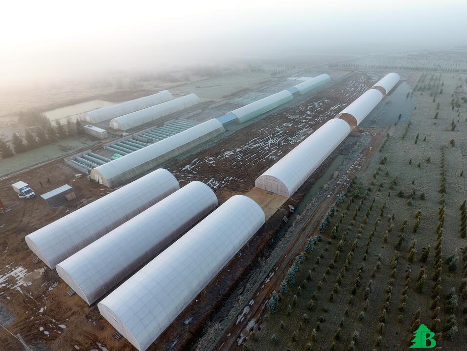 Питомник Внуково- тепличный комплекс в утреннем тумане.